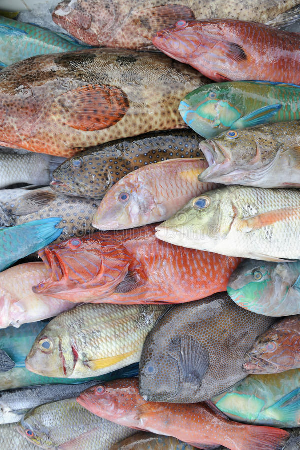 Download Tropical reef fish stock image. Image of turquoise, tropical - 19389167