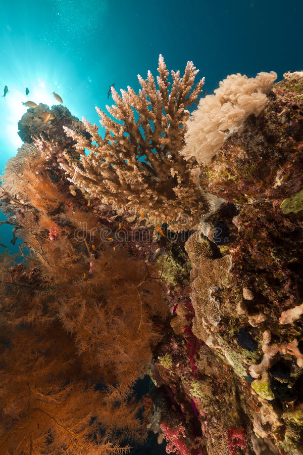 Download Tropical Reef And Fish In The Red Sea. Royalty Free Stock Photography - Image: 23223017