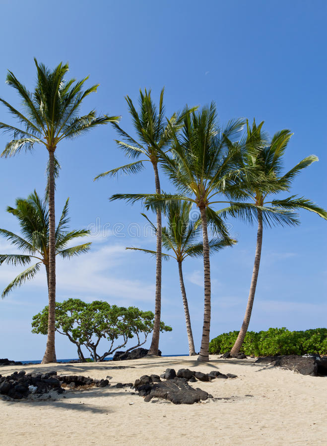 Download Tropical Resort Beach Royalty Free Stock Photography - Image: 22332167