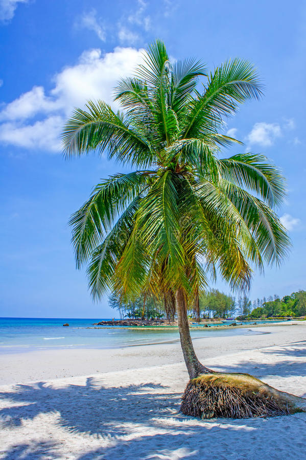 Download Tropical Resort With A Green Lagoon And Palm Tree Stock Image - Image: 41318223