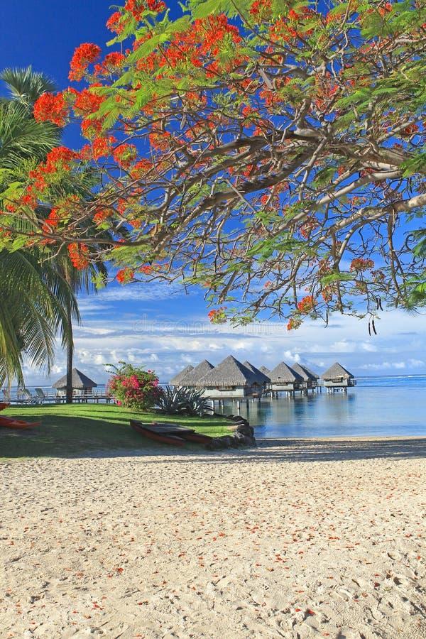 Tropical resort Tahiti royalty free stock photos