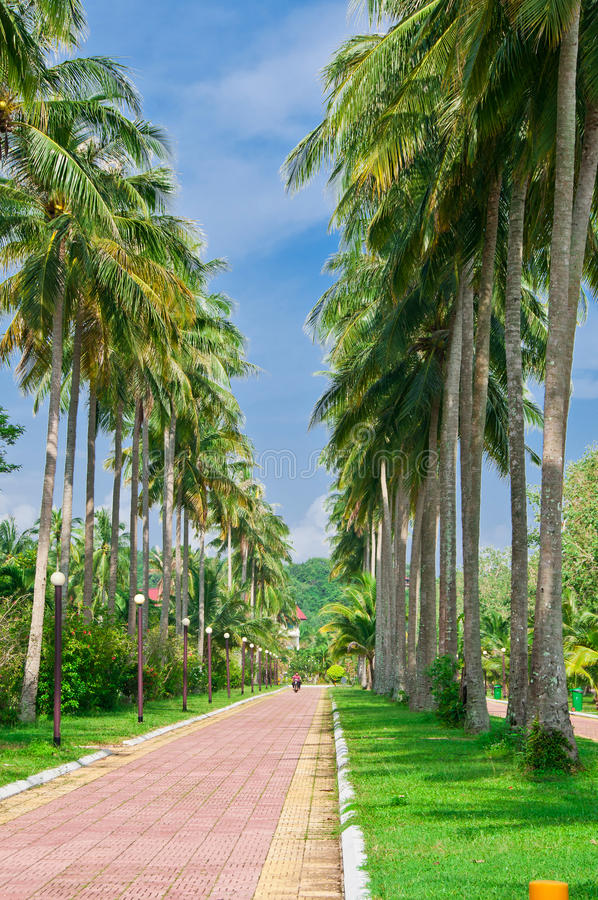 Download Tropical Road stock image. Image of tourist, road, vietnam - 20863331