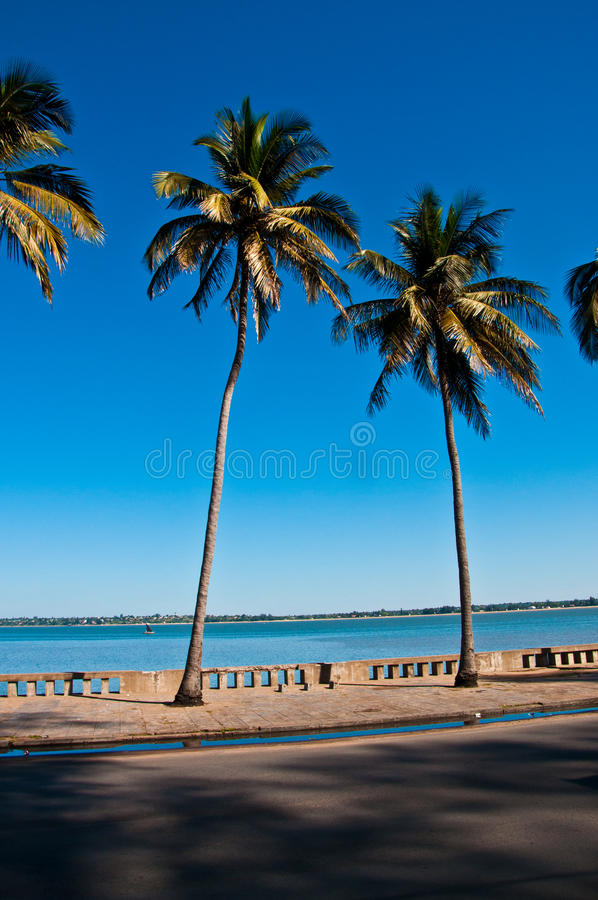 Download Tropical palm trees stock photo. Image of trees, maputo - 23200750