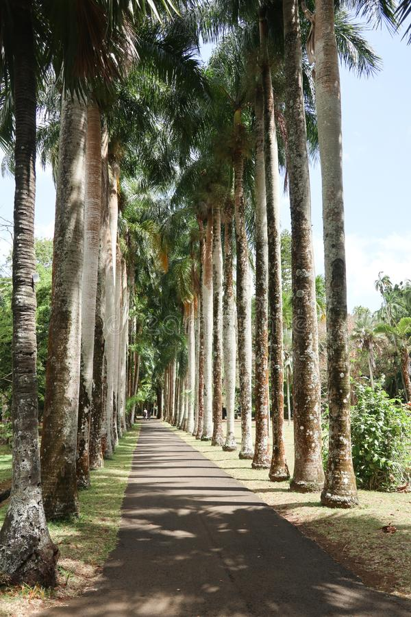 Tropical road lined with tall trees stock photo