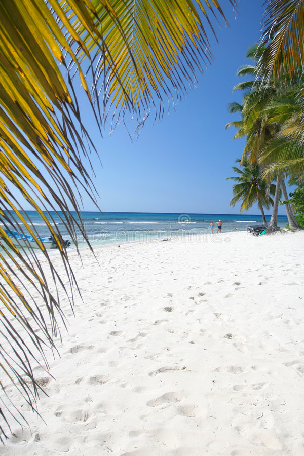 Download Tropical Sand Beach And Palm Trees Stock Image - Image: 8180979