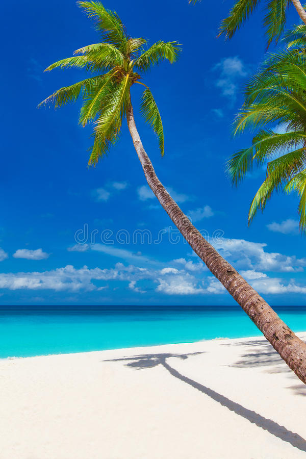 Tropical sand beach with palm trees, summer vacation vertical ph stock photography