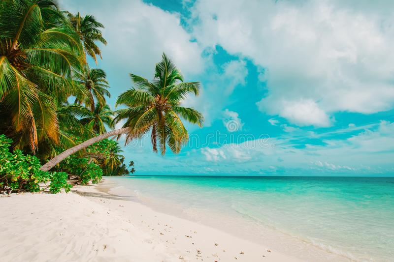 Download Tropical Sand Beach With Palm Trees Stock Image - Image of destination, relax: 114288851
