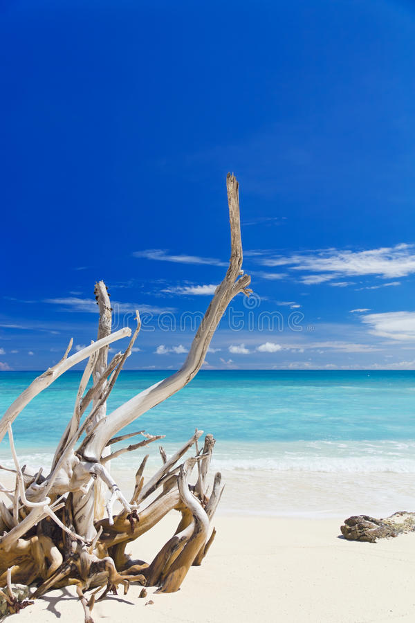 Download Tropical Sandy Beach With Old Dry Wooden Branch Stock Photo - Image: 28007736