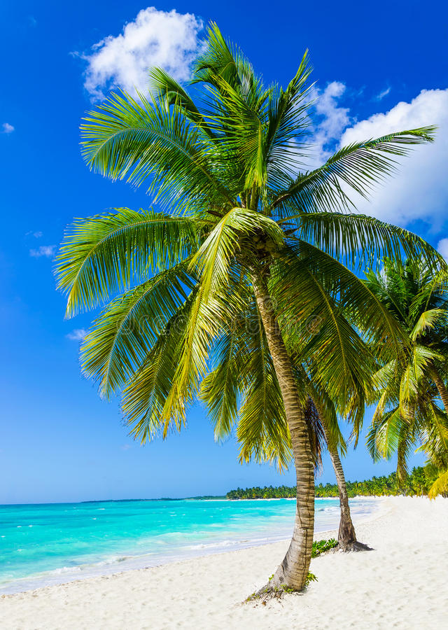 Free Tropical Sandy Beach With Exotic Palm Trees Stock Image - 40476641
