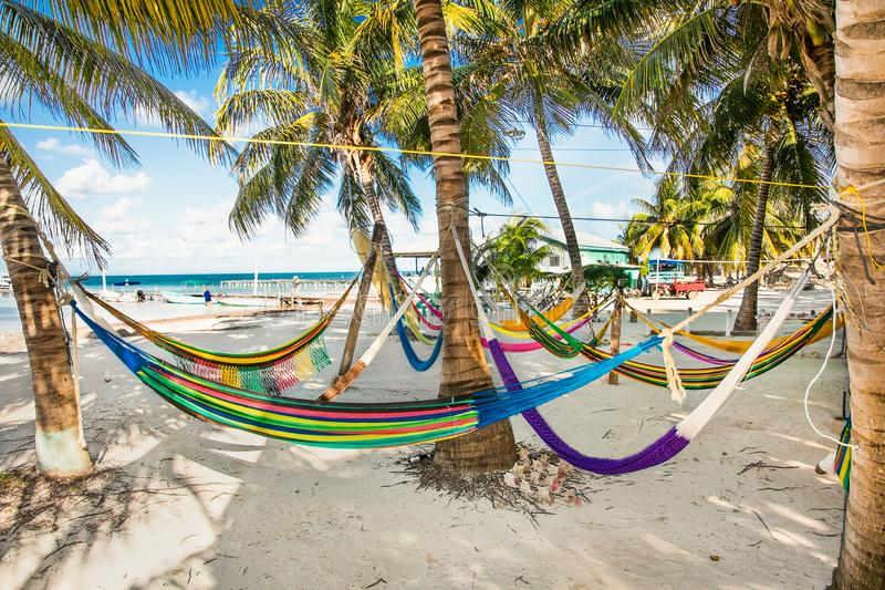 Hammocks between palm trees on sandy beach in Caye Caulker isla stock photography