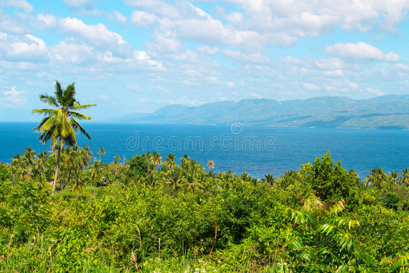 Tropical scenery with palm tree forest and sea. Philippines island hopping. Fresh greenery of exotic nature. Seaside scene with green forest. Distant island royalty free stock image