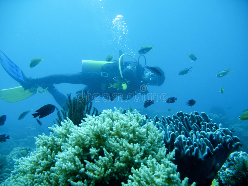 Download Tropical Scuba Diving Adventure Stock Photo - Image: 4494092