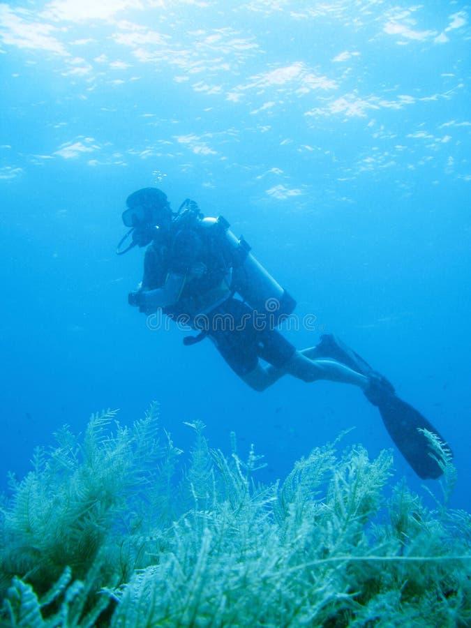 Download Tropical Scuba Diving Adventure Stock Image - Image: 4496111
