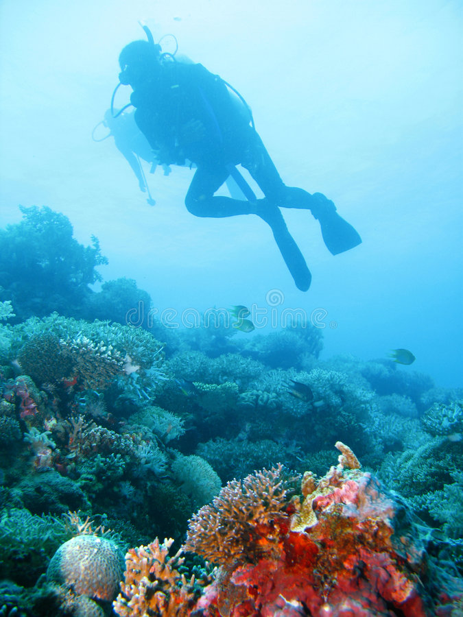 Free Tropical Scuba Diving Adventure Stock Image - 4496511