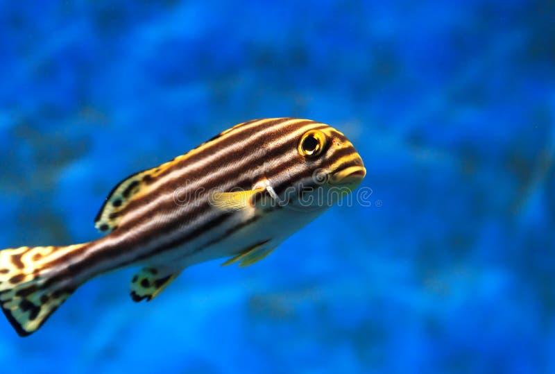 Tropical sea fish stock photography