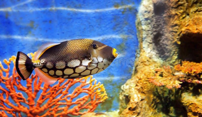 Tropical sea fish stock image