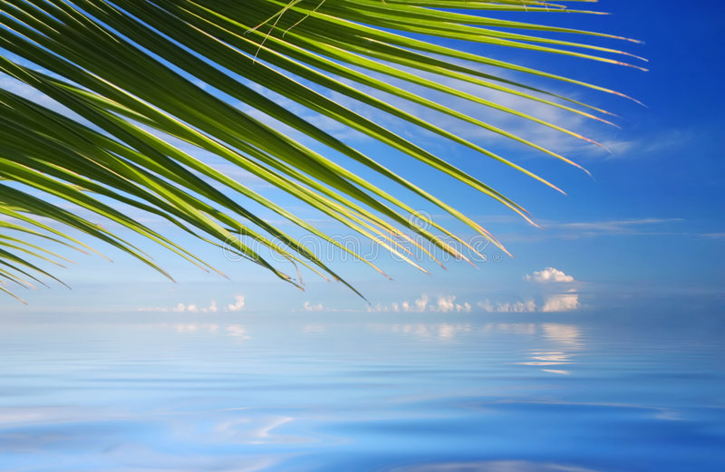 Tropical Sea with palm trees
