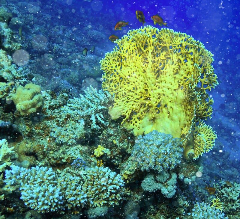 Tropical sea view royalty free stock photos