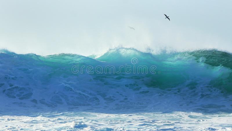 Tropical seabird soars over Pipeline surf stock image
