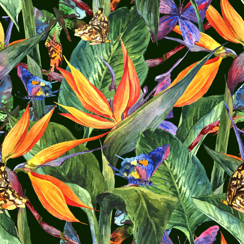 Tropical seamless pattern with exotic flowers. And butterflies royalty free stock images