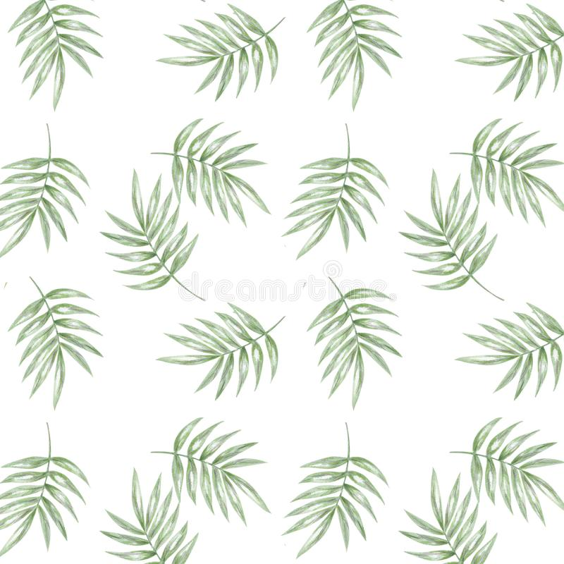 Tropical seamlless pattern with exotic palm leaves. Seamlless pattern tropic leafs on white background royalty free illustration