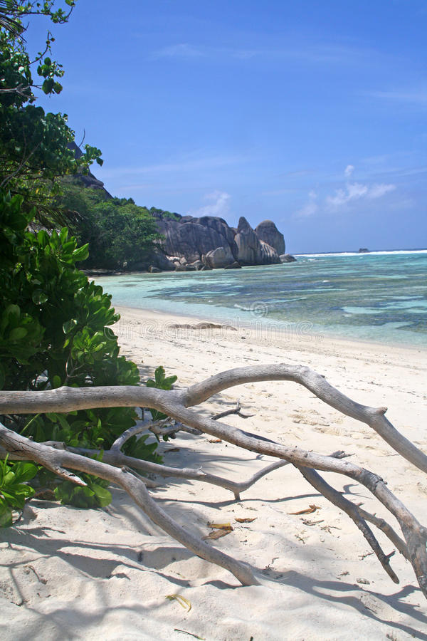 Tropical see with dead tree, Seychelles stock images
