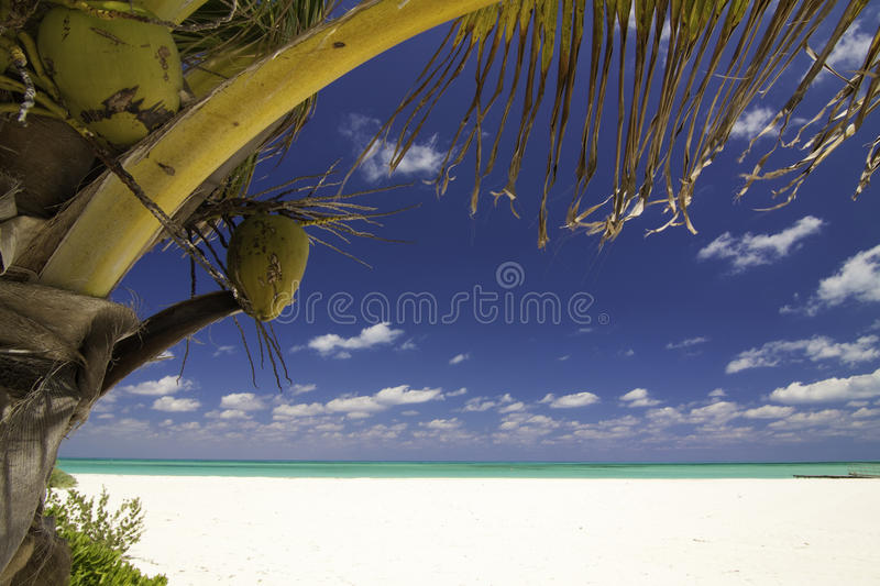 Tropical Serenity - Isla Pasion Cozumel Mexico stock images