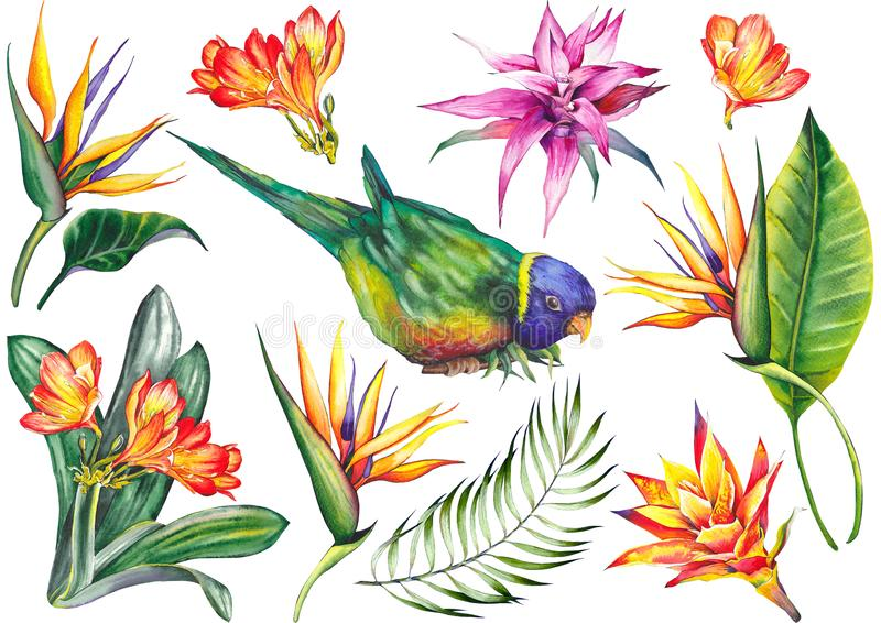 Tropical set with a parrot bird, exotic strelitzia and bromeliad flowers. stock images