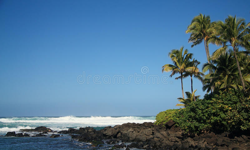 Download Tropical Shore stock photo. Image of relaxation, plants - 14415282