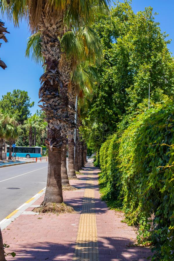 Tropical sidewalk. Walk through the resort area during the heat of the day. Palm trees along the road and green vine along the stock images