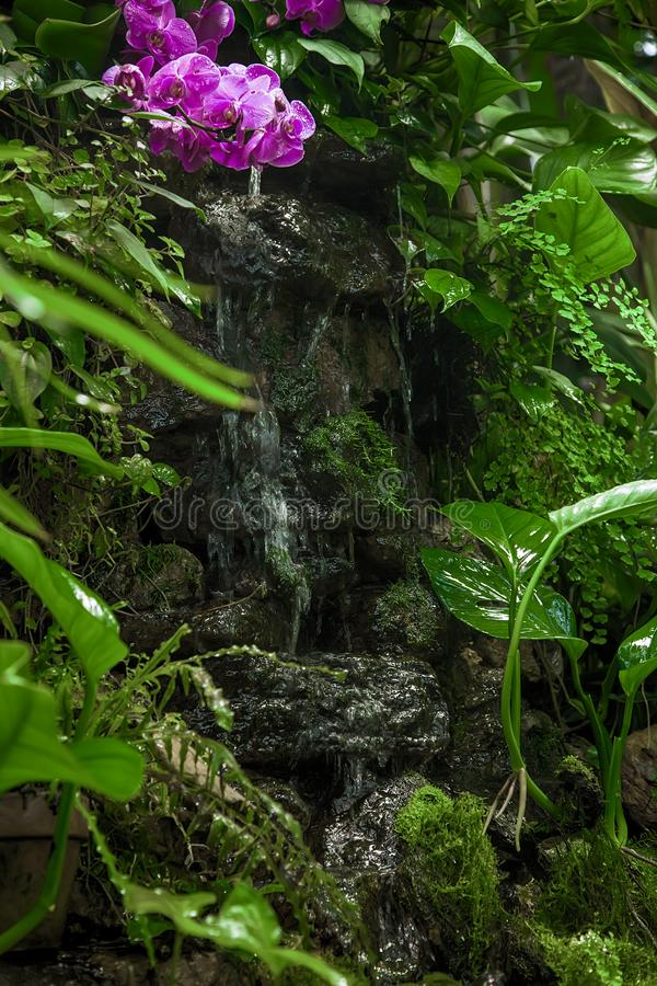 Tropical small waterfall among green plants and flowers stock images