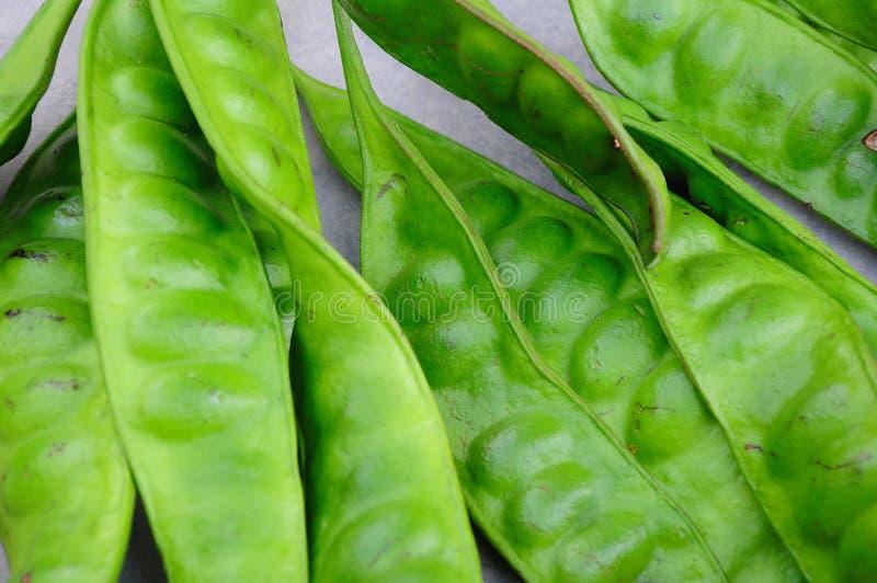 Tropical stinking edible beans on white background stock photo