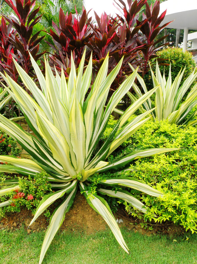 Free Tropical Style Landscaping Stock Photography - 6805852