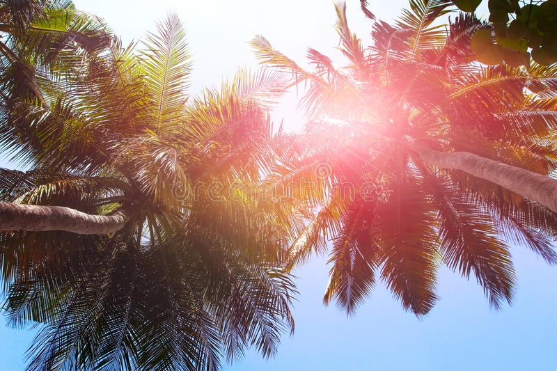 Tropical summer background. Palm trees against the sky.  royalty free stock photo