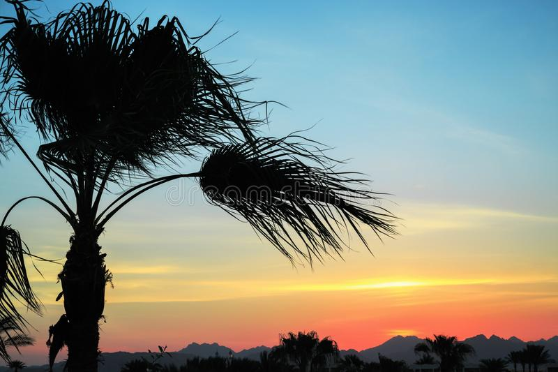 Tropical summer background with skyline Silhouette of palm tree at sunset. stock image