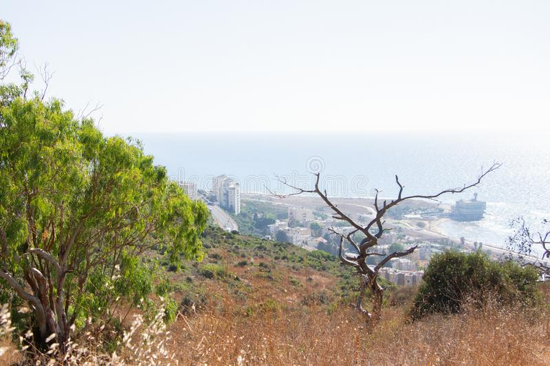 Tropical summer landscape view israel royalty free stock photography