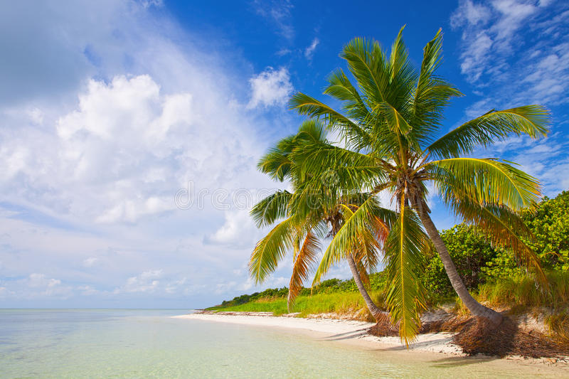 Tropical Summer With Palm Trees Royalty Free Stock Photos
