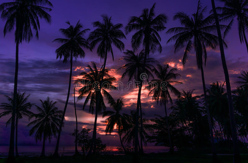 Tropical summer sunset and palms. Tropical summer sunset, beautiful sky and palms stock photos