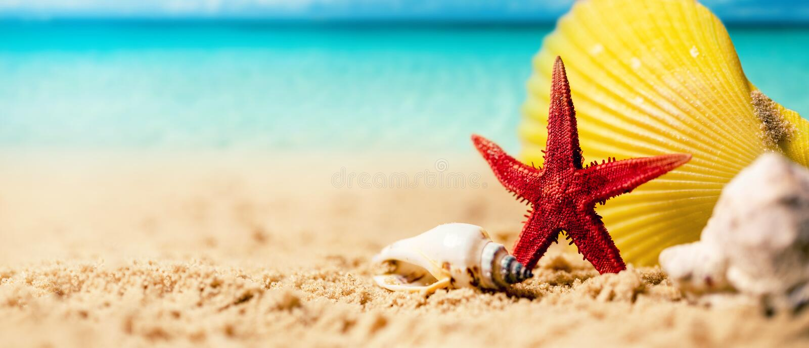 Tropical summer vacations - seashells and starfish on the exotic beach sand with ocean in the background stock photography