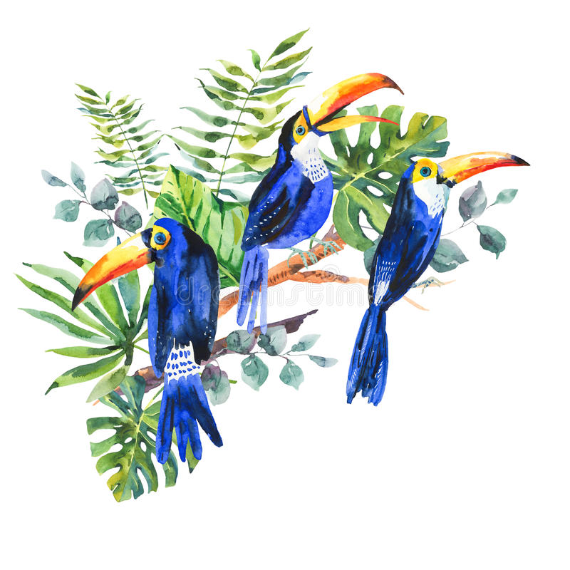 Tropical summer watercolor greeting card with toucan royalty free illustration