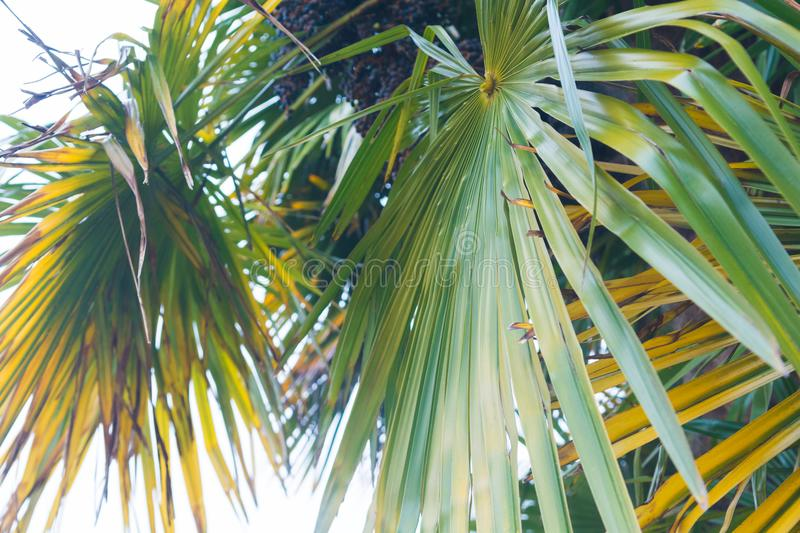 Tropical summertime background of palm tree leaves stock images