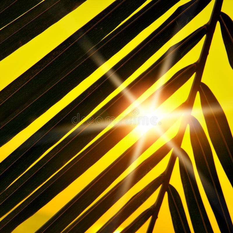 Download Tropical sunset stock photo. Image of outline, palmtree - 12558670