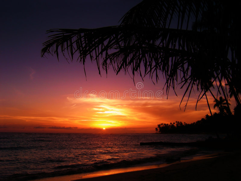 Download Tropical sunset stock photo. Image of lake, tropical, tree - 193736