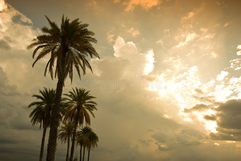 Download Tropical sunset stock image. Image of storm, warm, tree - 8540277