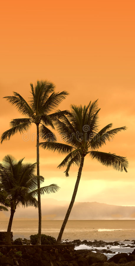 Tropical sunset (icon photo). Tropical sunset with palms (typical tropical sunset). Space for TEXT royalty free stock images