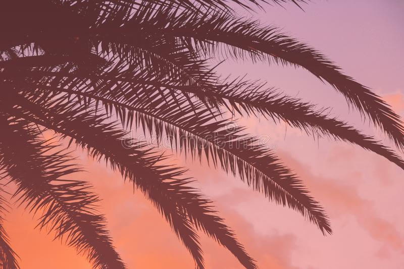 Tropical sunset and palm leaves vivid coral background stock image