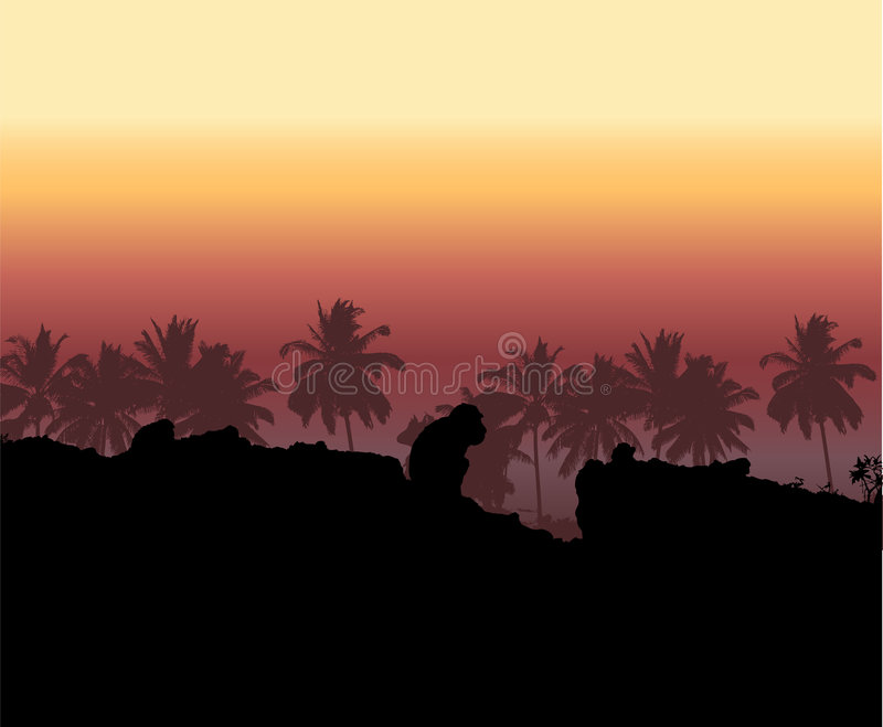 Tropical sunset, palm tree silhouette stock illustration