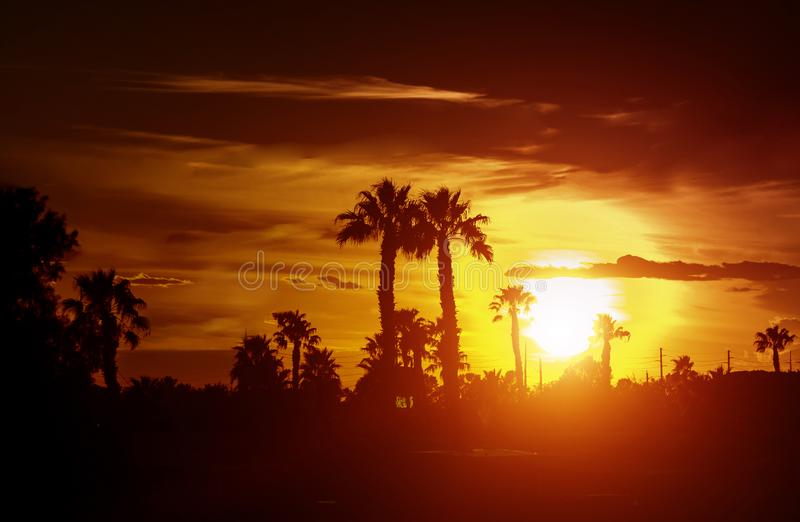 Palm tree silhouette on a background of tropical sunset royalty free stock photography