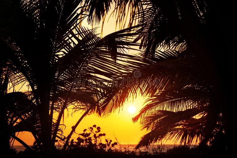 Download Tropical sunset stock image. Image of holiday, background - 33518075
