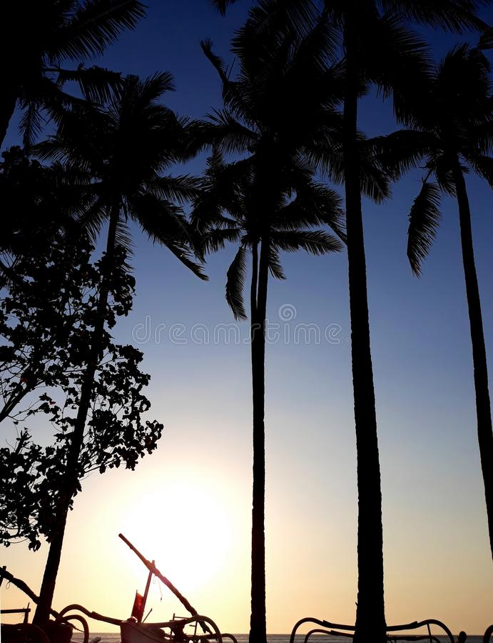 Tropical sunset with palms in silhouette stock image